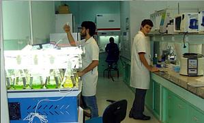 microalga_Labim_INT_laboratorio-contra-pandemia-covid19
